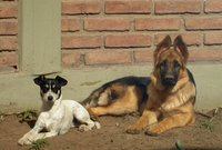 #FelizDiaDelAnimal esos son mis amores Fufy y Sancho