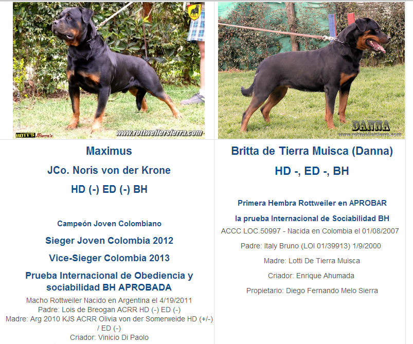 Camada I. Cachorras Disponibles