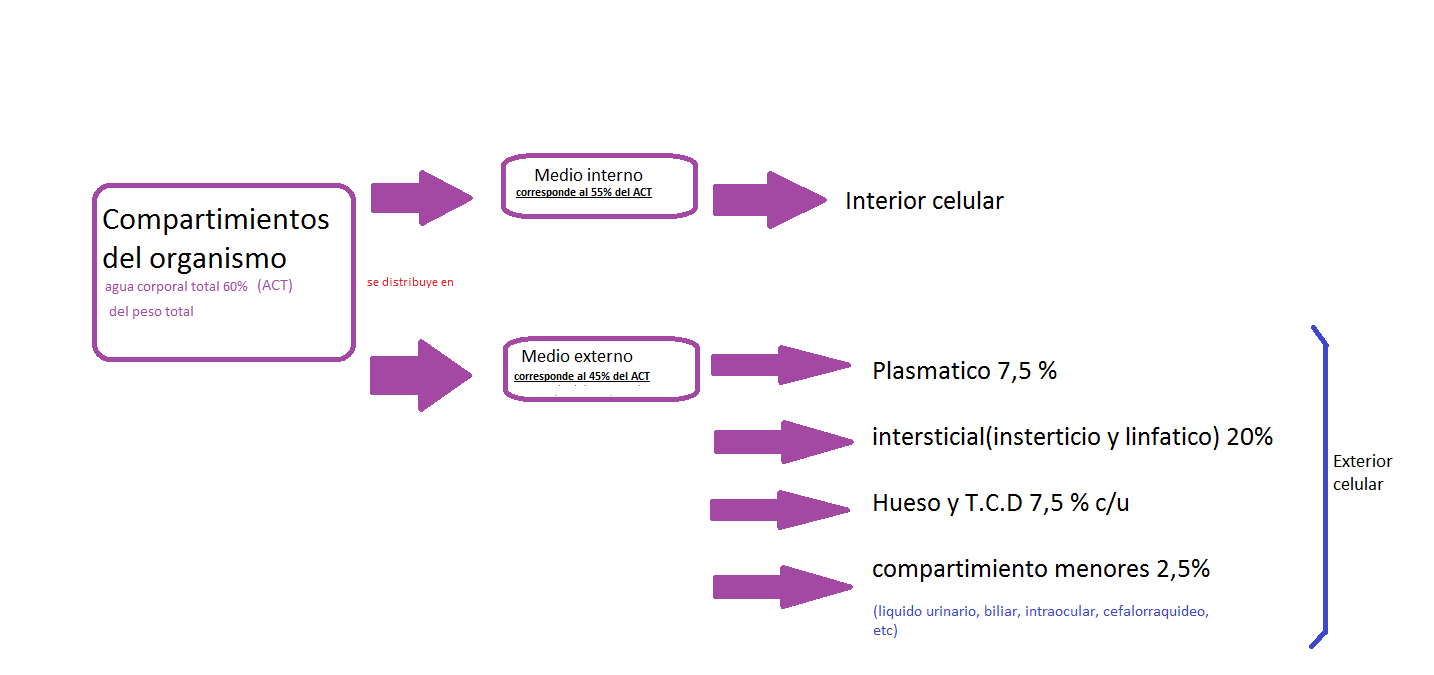 Medio interno y homeostasis info taringa for Interno mail